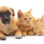 Red new puppy, kitten and bunny on a white background.