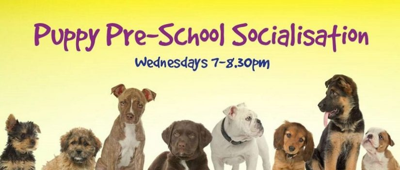 Puppy Pre-School banner with a line-up of very cute puppies along the bottom