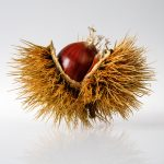 horse-chestnut open with seed revealed.